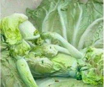 这是蔬菜西施么